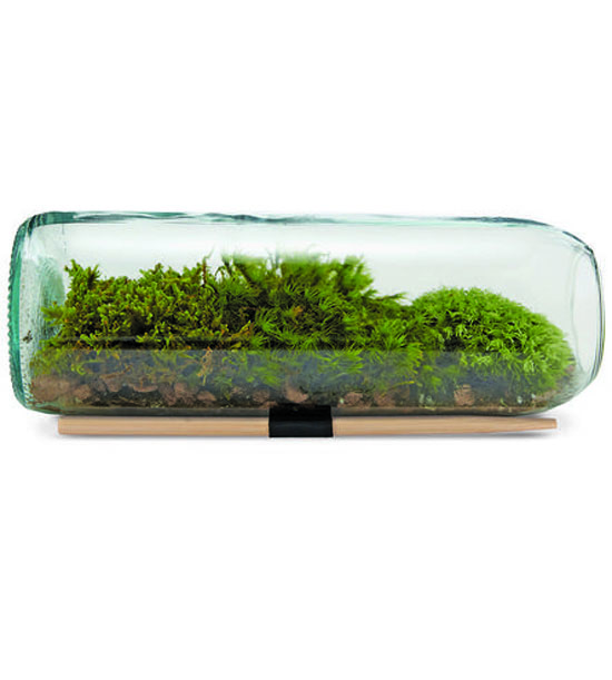 Favorites: Moss Terrarium Kit // So in love with this cute moss terrarium bottle kit! What a great idea for a wedding favor! Let love grow with your very own little desktop garden! It comes with directions and fits comfortably in your hand - perfect size for favors!